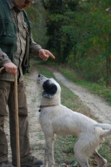 訓練された犬